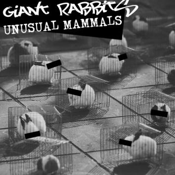 GIANT RABBITS - UNUSUAL MAMMALS